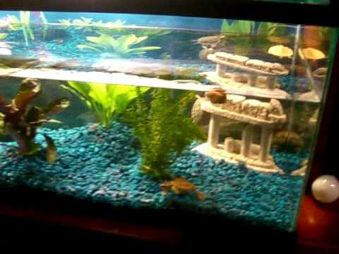 New Large (40 Gallon) Turtle Aquarium - YouTube