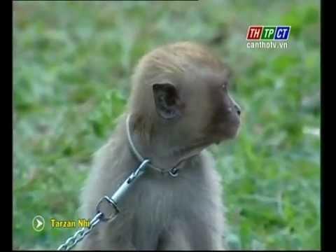 Tarzan nhí 16 | Tư vấn Vinhomes Metropolis Liễu Giai 0903.235.198