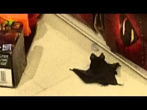 Murciélago en Ripley Portal Temuco, 3° piso sección niños