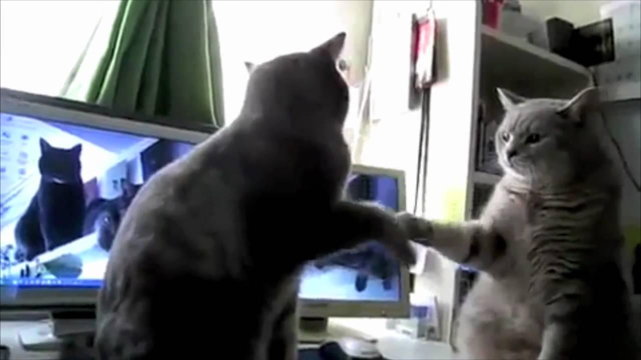 Les chats qui jouent à se taper dans les pattes