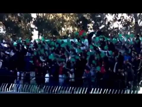Animation Ultras Verde Cavallo | Usmm Hadjout vs Jsm Tiaret | Coupe D'algerie