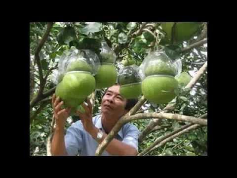 Nhac xuan tuyen chon 'hay nhat' 2013, Tet Nguyen Dan   VMusic   YouTube