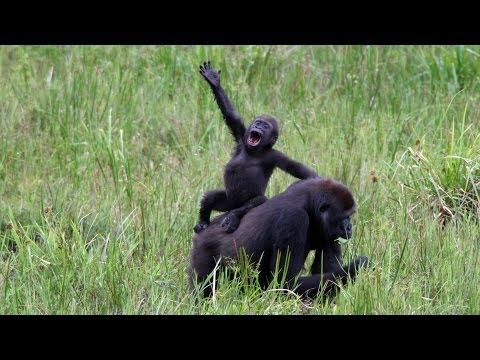 How Will You Celebrate World Wildlife Day?