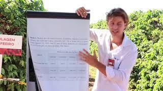 Sistema Radicular do Cafeeiro Dr. Felipe Santinato Dia de Campo Fazenda AUMA