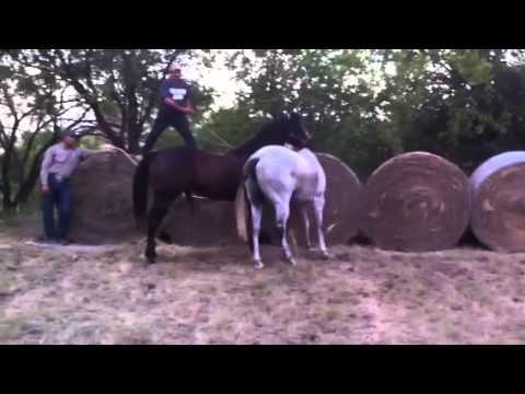 Mad gay horse lol - YouTube
