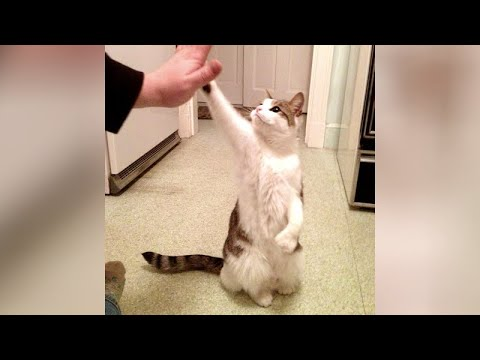 LAUGH & FORGET YOUR STRESS! - Best ANIMAL VIDEOS 2020