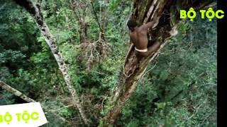 Bộ Tộc - Bộ tộc sống trên cây duy nhất ở Trái Đất