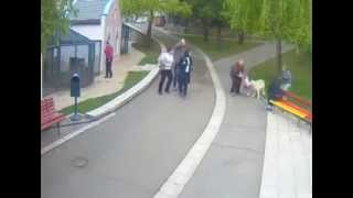 [Wolf attacks kid child at zoo] Video