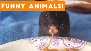 Cutest Pets of the Week Compilation October 2017 | Funny Pet Videos