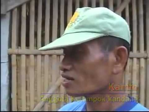 Penggemukan Sapi 40 hari   Natural Nusantara   YouTube