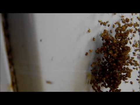 Little spiders, look at the whole video