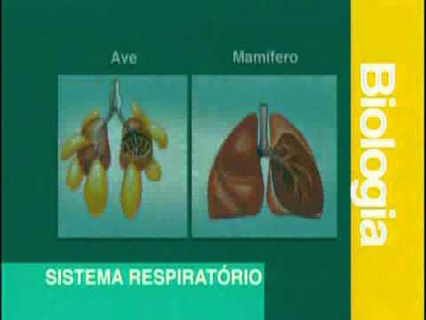 A 05 - Sistema Respiratório - Biologia - Vestibulando Digital