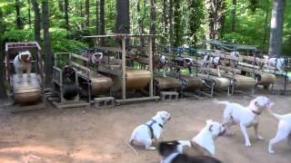Academia de ginástica para cachorro