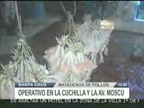 CLAUSURAN MATADEROS DE POLLOS @ RED PAT BOLIVIA