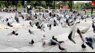 Keď dáte vtákom preháňadlo