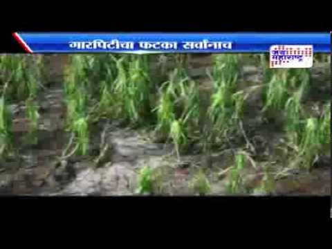 Hailstorms damage crop in Maharashtra