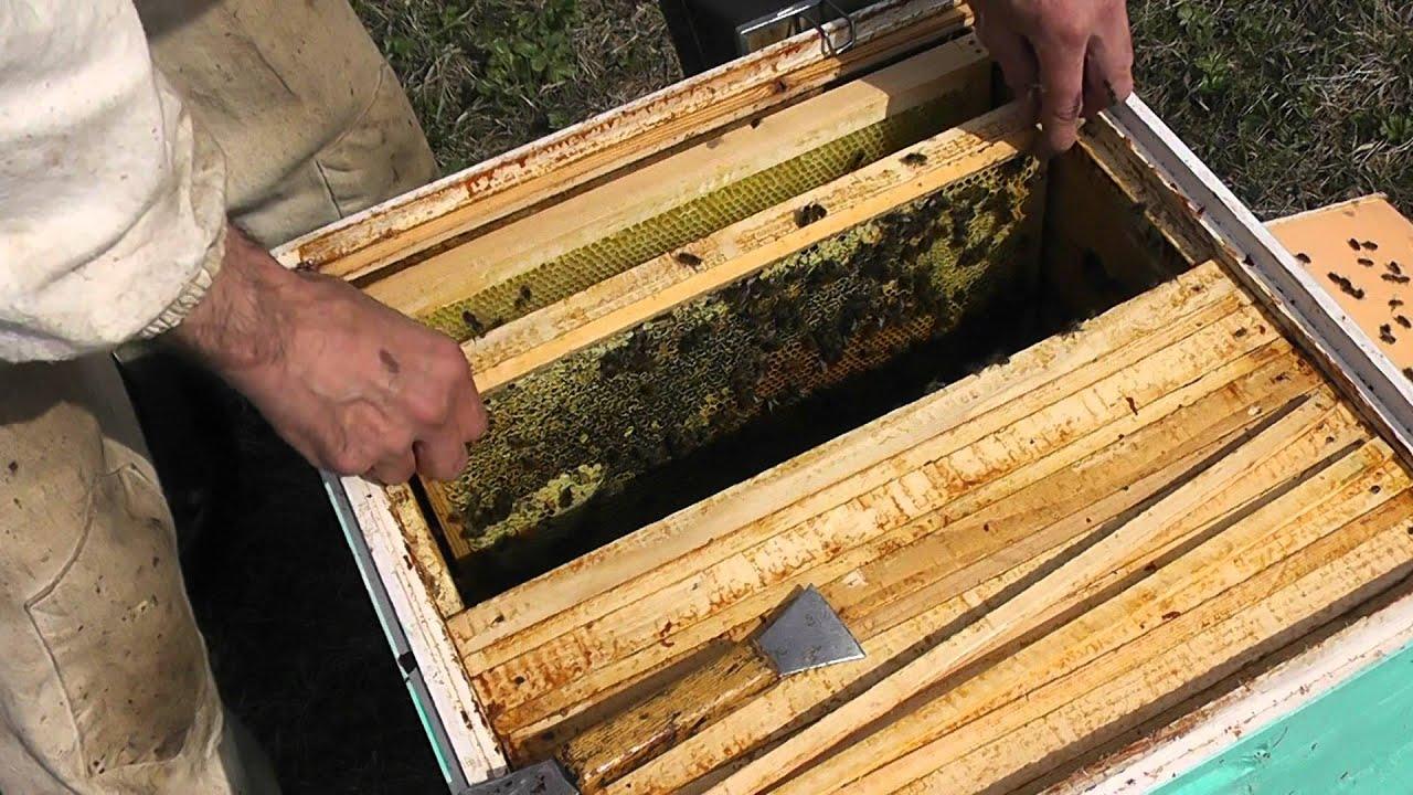 Как сделать отводок пчел Пасека. Пчелы. Мёд 34