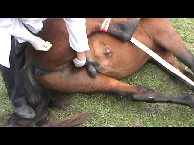Конь трахает сисястых девок