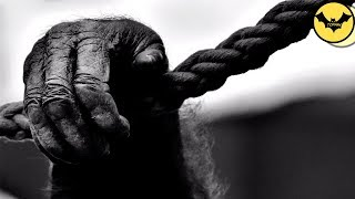 5 Creepy Animals Behaviors That Science  Can't Explain.