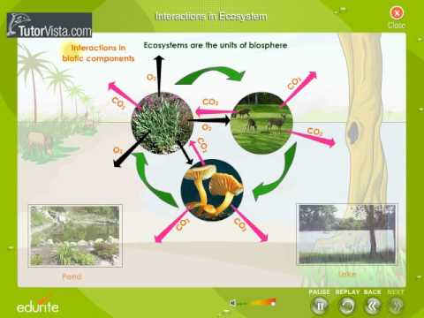 Interaction In Ecosystem - YouTube