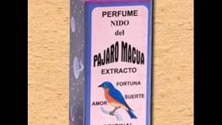 Adolfo Pacheco. Pajaro Macua.