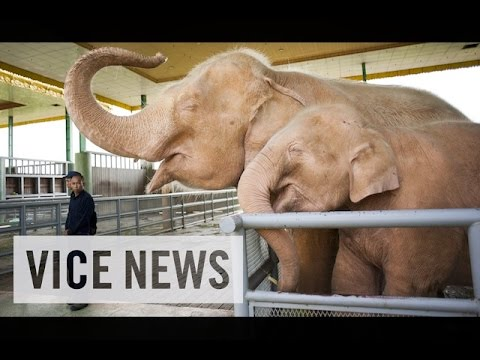 VICE News Daily: Beyond The Headlines - July, 08 2014