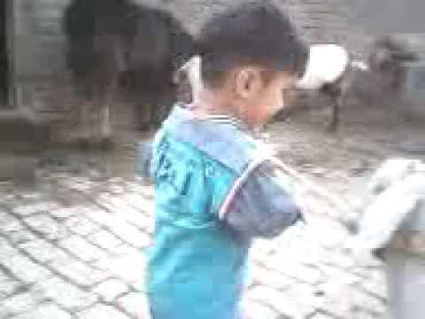 Village Life Ahmad Raza Gujrat Pakistan.3gp