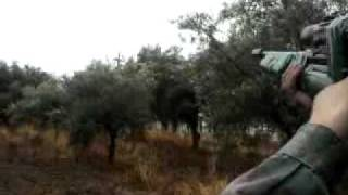 Caza De Palomas Con Aire Comprimido