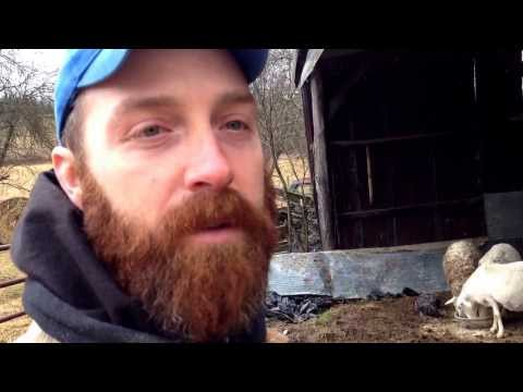 Caring For My Lactating Ewes In The Winter
