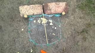 Como hacer una trampa para pajaros casera automtica mp3 - Cepos para ratones ...