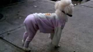 Como Hacer Ropa Para Perro, La Muestra
