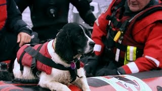 Can a Search Dog Find Meat Hidden in a Deep Lake?