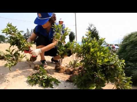 2014 UN Public Service Awards Category 2 Winner - Korea - Video 1