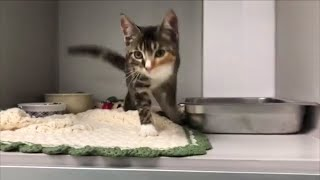 The Reason Why This Cat Can't Stop Twerking