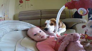 หมาแสนรู้ช่วยคุณแม่เปลี่ยนผ้าอ้อม