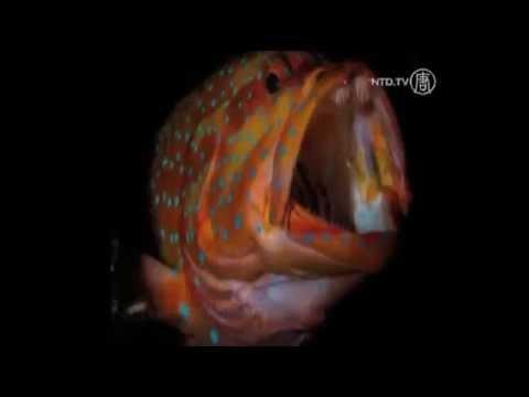 Cuộc thi ảnh người mẫu và sinh vật biển tại Biển Đỏ
