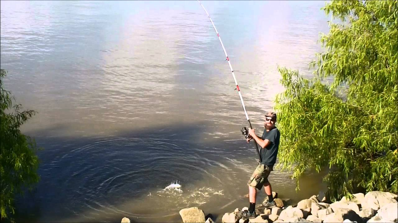 Mississippi river catfish fishing in the morning youtube for Mississippi river fish