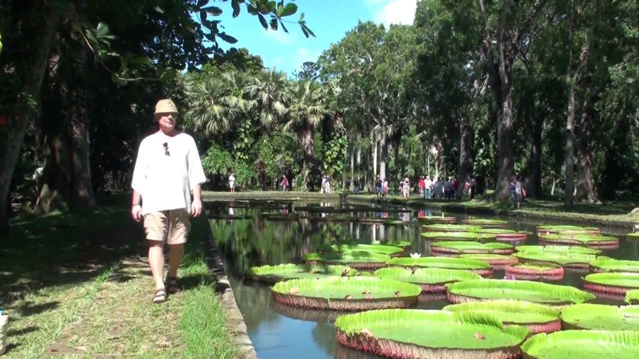 Прогулка ботанический сад на острове маврикий
