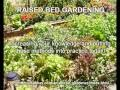 GARDENING 101 - growing trees, fruits, vegetables and flowers!
