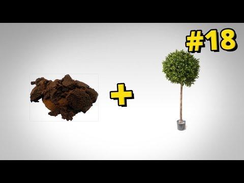 Jak pielęgnować rośliny za pomocą ... kawy i herbaty