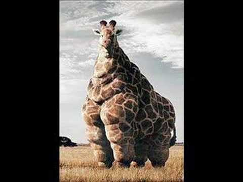 WORLD'S FATTEST ANIMAL - YouTube Fattest Animal In The World
