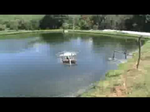 Construccion de estanque rustico tilapia youtube for Estanques de mojarra tilapia