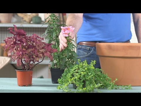 5 Container Gardening Mistakes | Southern Living