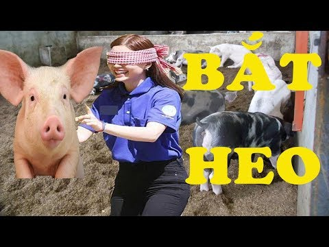 Khi Con Gái Chơi Bịt Mắt Bắt Lợn  -  Xem 1000 Lần Vẫn Cười