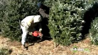 picture of Christmas Tree Farm Worker