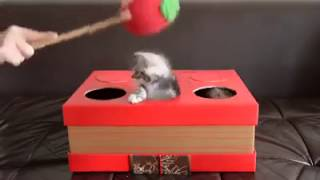 Whac-A-Mole with Kittens