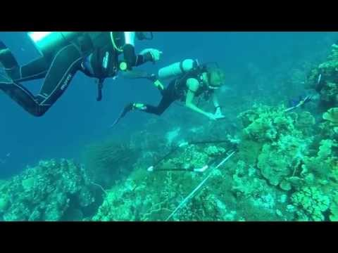 Coral Reef Research and Monitoring in the Caribbean Sea