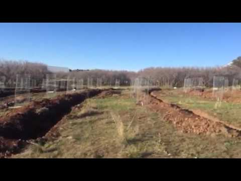 Apple Orchard: Permaculture