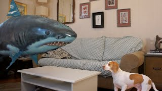 Cute Dog vs. Shark Balloon