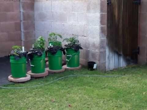 mom's double bucket garden part 1